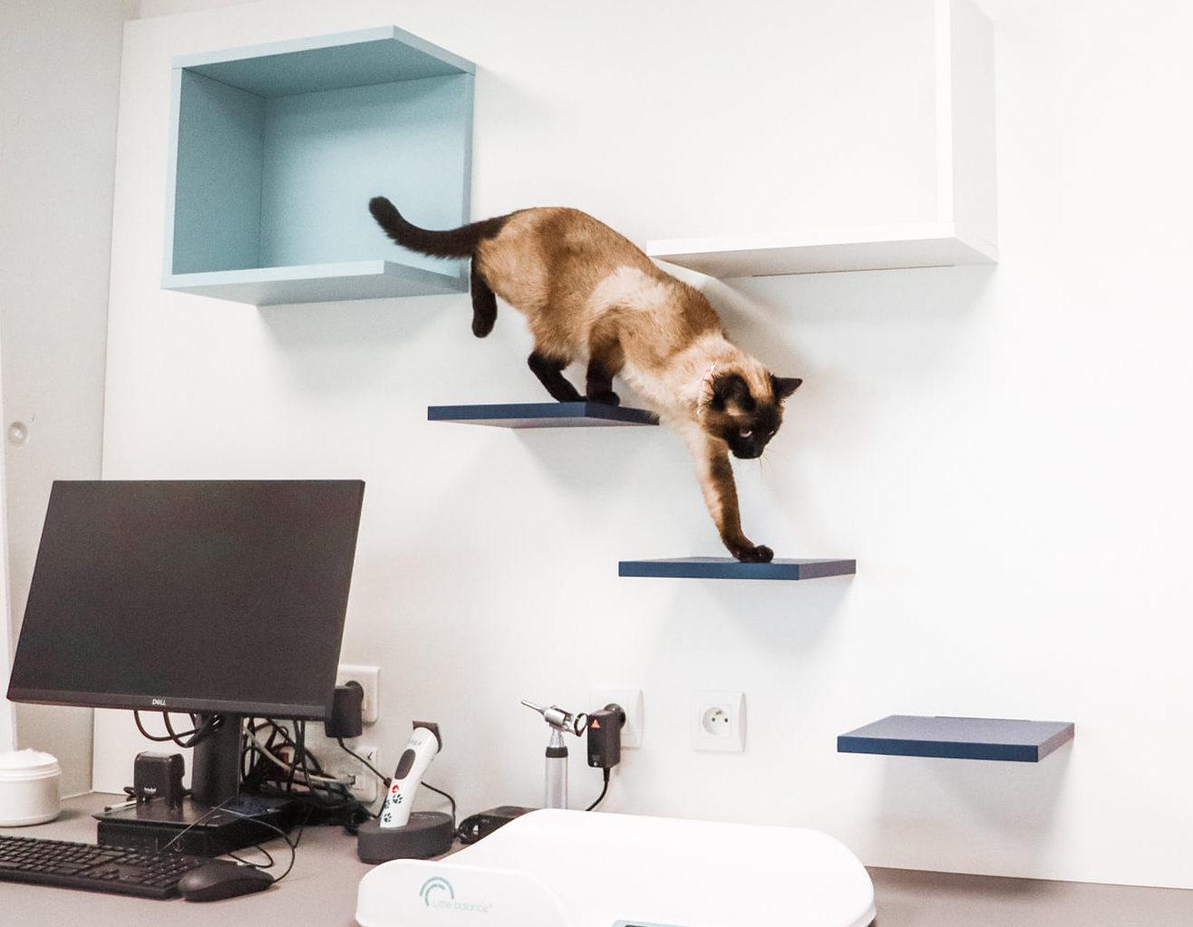 Athex - aménagement salle de soin vétérinaire